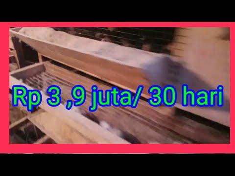 SIAPKAN KARUNG DUIT!! CUMA USAHA BEGINIAN UNTUNG BERLIMPAH || IDE BISNIS BUMBU GILING DAN REMPAH.из YouTube · Длительность: 11 мин27 с