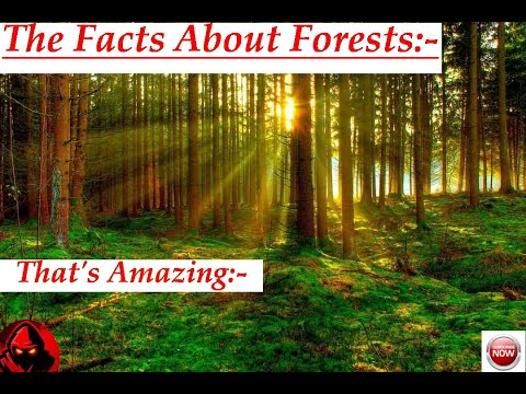 Forest our life line! THAT'S AMAZING