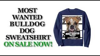 Most Wanted Bulldog Cute Funny Dog Sweatshirts - Men's, Women's, Kid's - Black, Heather Grey, Blue