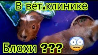 Svinki Family Blog:Мы ветеринарной клинике!Что случилось?Блохи???