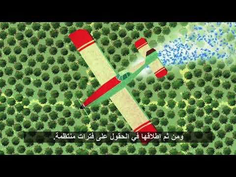 فيديو : تقنية تعقيم الآفات بالإشعاع الذري ! 2