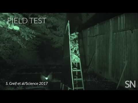 Bats vs. smooth surfaces | Science News