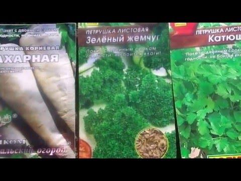 Петрушка - лечебные и полезные свойства, применение