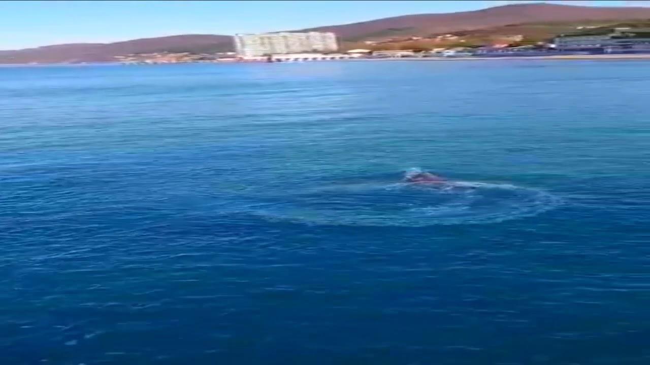 Дельфины утром зашли в Лазаревское Сочи 17 Января 2020 ...