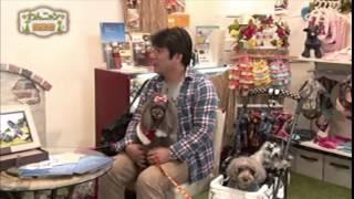 (愛犬と夢のハワイへ)ホノルルドッグコンシェルジュ http://www.honol...
