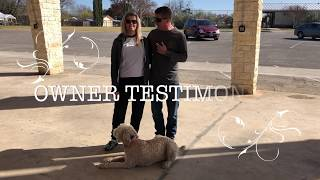 "Goldendoodle ""Roxie"" 