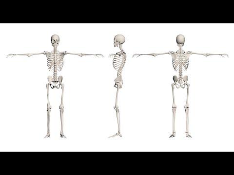 صحة العظام والمفاصل وكيفية الحفاض عليها  - نشر قبل 3 ساعة
