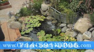 Koi Pond Water Plants & Installation In Orange County California (714) 591-0006