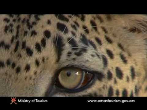 wild life of Oman Ministry of Oman Tourism