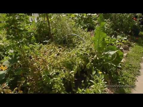 100 Sq. Foot Biointensive Test Garden Tour
