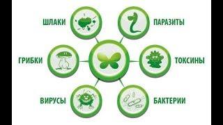 Бактерии и грибки в организме человека - Ольга Бут...