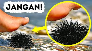 Download Kalau Kamu Menginjak Hewan Laut Ini, Segera Cari Pertolongan