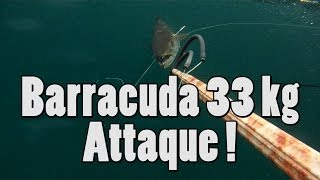 Barracuda 33 kg attaque - Barracuda attack !! Spearfishing