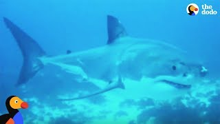 Shark Fin Soup Is Destroying Our Oceans | The Dodo thumbnail