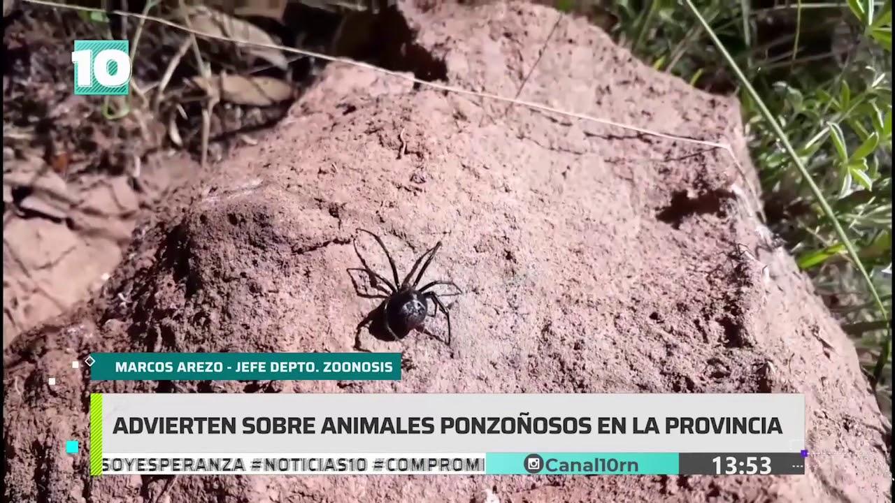 #Noticias10   Advierten sobre animales ponzoñosos