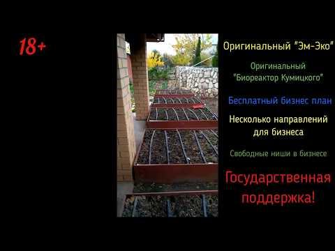 Жимолость зацветает в Жигулёвске под зиму! Эм-эко однако.