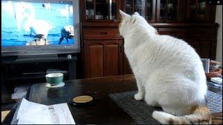 NHKの番組「さわやか自然百景」を見ています。 この番組は動物が出て...