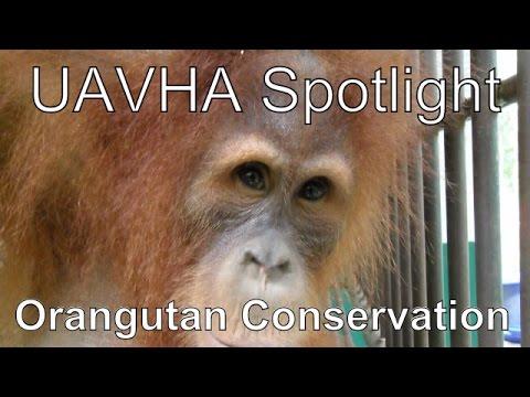 UAVHA - Nominee spotlight: Sumatran Orangutan Conservation Program