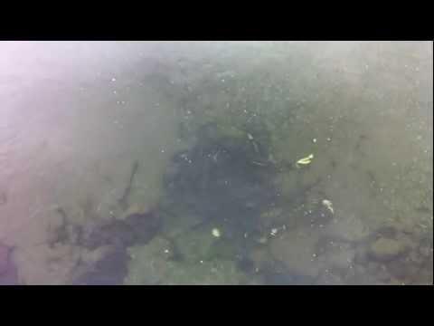 Salmon in Seldovia