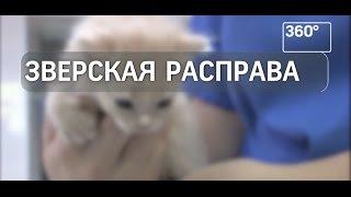 Нетрезвый житель Екатеринбурга выбросил из окна домашних животных