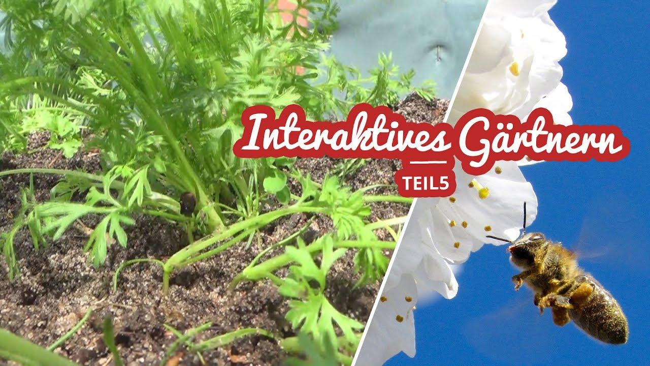 Interaktives Gärtnern Teil 5 | Unkraut und Mais Artikelbild