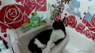 Кот который спит в умывальнике.