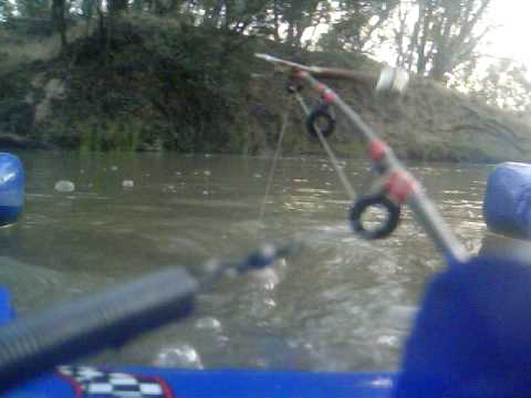 Rc fishing boat catches yellowbelly youtube for Rc boat fishing