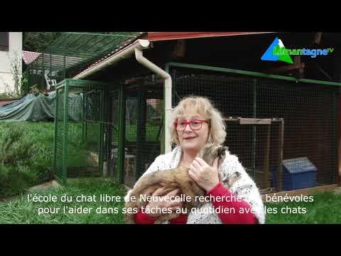 Ecole Du Chat Libre Neuvecelle