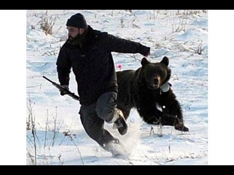 Мультфильм Прикол про белого медведя смотреть онлайн