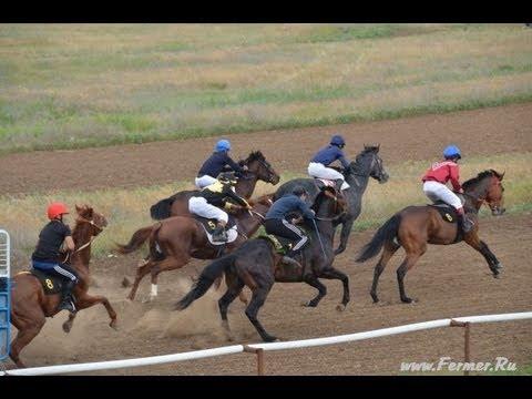 Скачки на лошадях Элиста 16 мая 2013г.  III заезд, 1600 метров