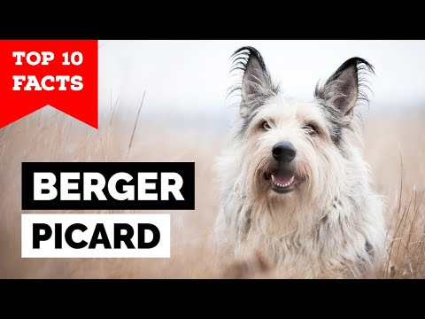 Berger Picard - Top 10 Facts