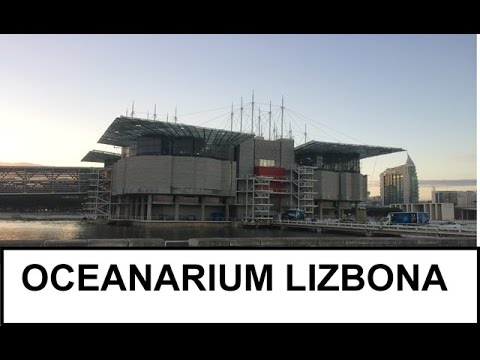 Oceanarium Lizbona / The Lisbon Oceanarium