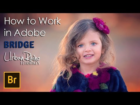 How to Work in Adobe Bridge