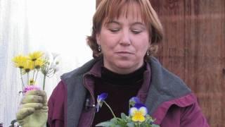 Gardening Tips : How to Water Houseplants