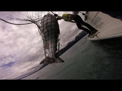 Awesome Salmon Fishing for Silvers - Juneau Alaska