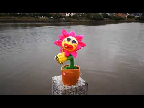 Enchanting and Singing Sunflower Toy