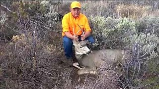 Mule Deer VS. 300 Ultra Mag at 350 yards!