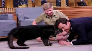 Jimmy Fallon and Robert Irwin Play with Baby Black Bears