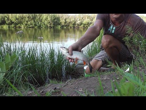 Как я парю пшеницу, как насаживаю и что ловится. Fishing rod float