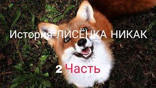 Фильм 2-ой 🎬🎬ИСТОРИЯ ЛИСЁНКА НИКАК 2 ЧАСТЬ.