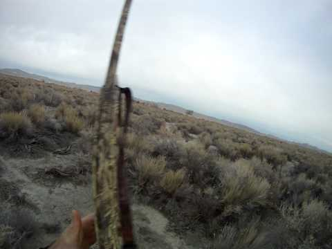 Nevada Quail Hunting Ugly Dog