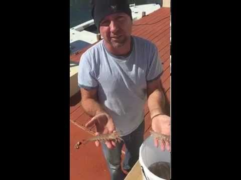 Shrimp Catch in Tavernier, Florida Keys!