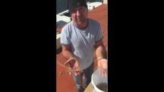 Shrimp Catch in Tavernier, Florida Keys!