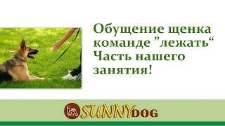 Лежать Обучение щенка Это часть нашего занятия