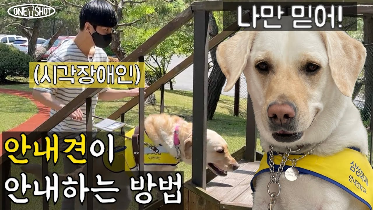 안내견은 시각장애인을 어떻게 안내할까?