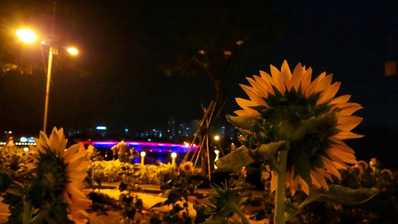 Dạo chơi Cầu Ánh Sao – Hồ Bán Nguyệt : Đường Hoa Xuân Phú Mỹ Hưng dần lộ diện