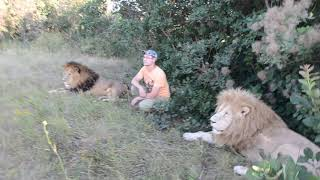 К льву Дейлу люди идут как немея от страха ..People go to the lion Dale like numb from fear..