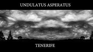 undulatus asperatus tenerife