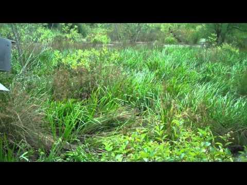 Flora of the Wetlands
