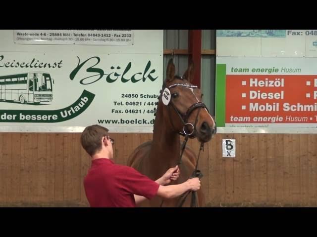 Holsteiner mare by Quiran born 2013